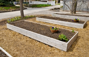 raised bed, raised garden, gardens, mulch, compost, weeds, weasel, plant, plants, planting