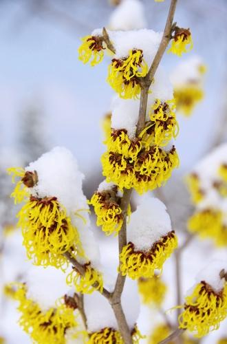Planning For Your Winter Flower Garden Groundbreakingtips